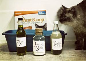 ingredients-for-a-natural-litter-box